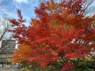 紅葉を愛でながらの江東区木場公園でのランニングは心地良いです