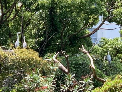 江東区横十間川親水公園では、この時期には、ランをしながら野鳥の子育てを見る事が出来ます