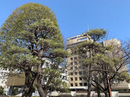 【東京2020オリンピック聖火リレー】江東区で聖火リレーサポーターを募集しています