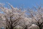 【江東区清澄白河のケーキ工場『藤堂プランニング』】春のお客様感謝セールは本日までです